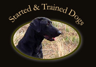 Started and Trained Dogs