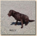2007_willy