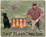 2008_laws_lacy_jh